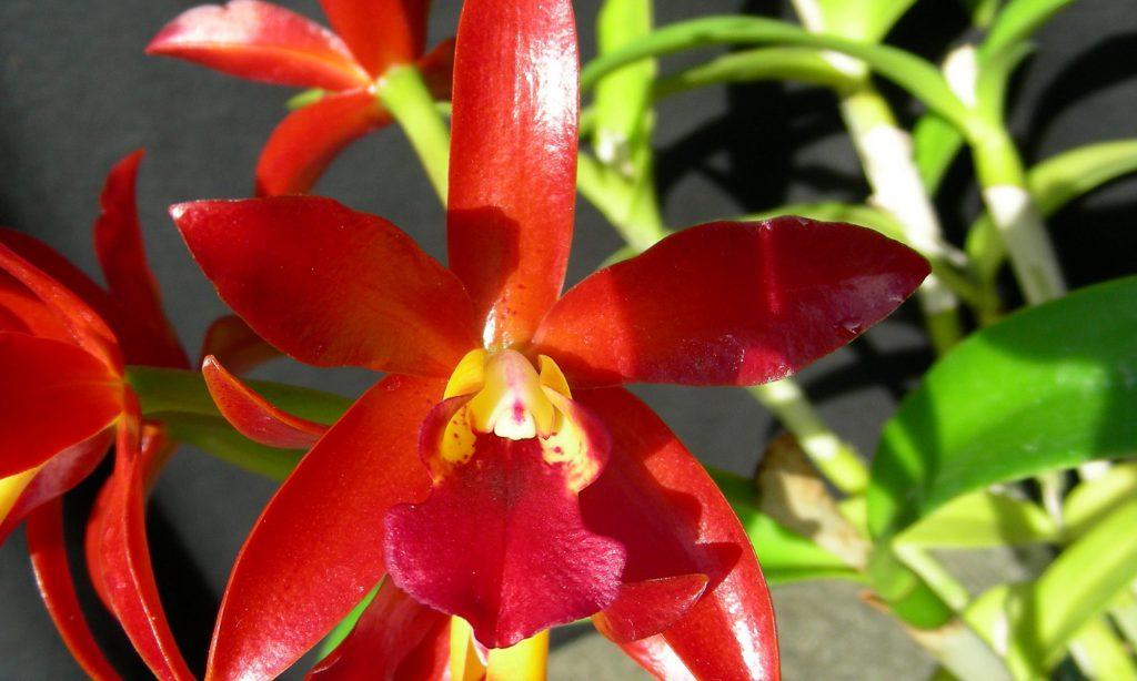 Manawatu Orchid Society